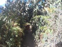 Cactus tunnel